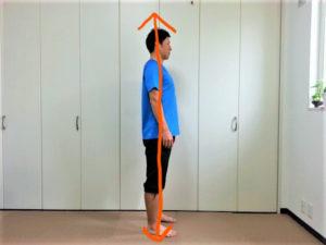 正しい姿勢の力の伝わり方